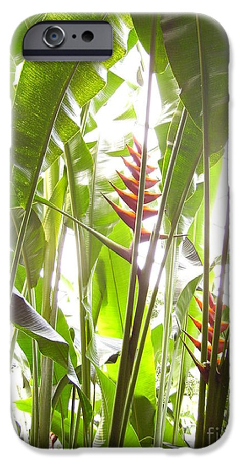Plants IPhone 6 Case featuring the photograph Tropical2 by Heather Morris
