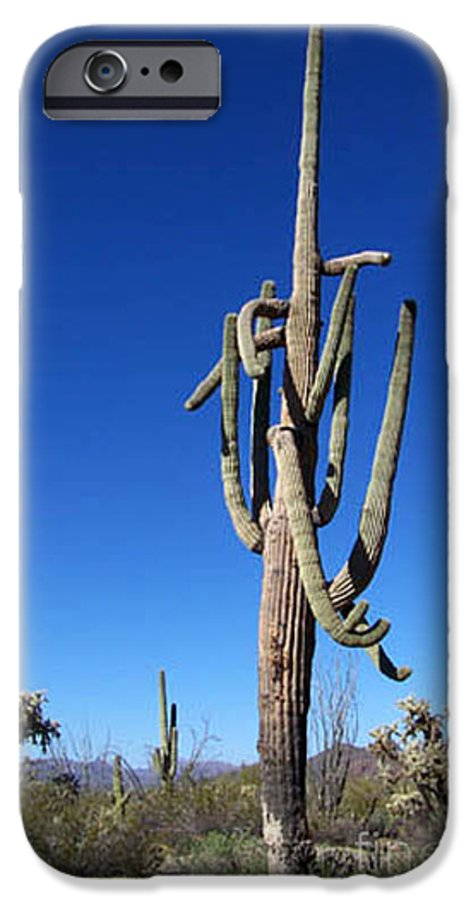 Sahuaro IPhone 6 Case featuring the photograph Twisted Sentinal by Kathy McClure