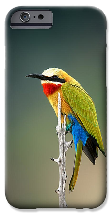 Bee-eater IPhone 6 Case featuring the photograph Whitefronted Bee-eater by Johan Swanepoel