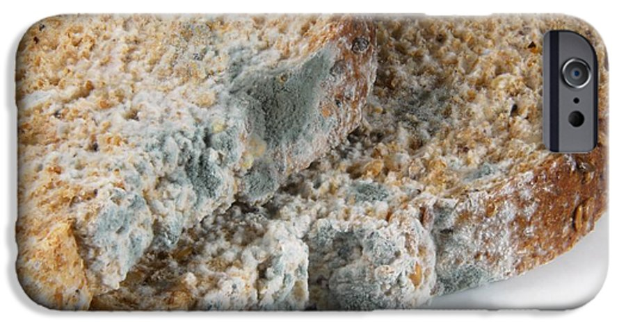 Fungus IPhone 6 Case featuring the photograph Mouldy Bread by Cordelia Molloy