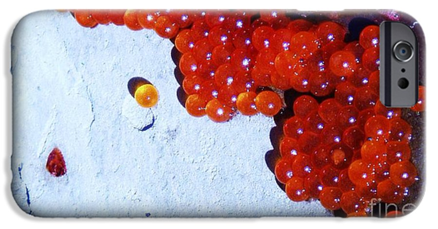 Photograph Fish Egg Lake Water Rock IPhone 6 Case featuring the photograph Don't Kill Me. by Seon-Jeong Kim