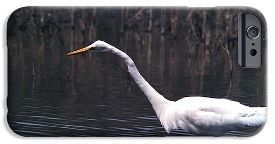 Great Egret IPhone 6 Case featuring the photograph 070406-8 by Mike Davis