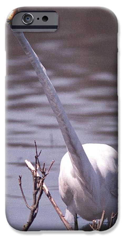 Egret IPhone 6 Case featuring the photograph 070406-9 by Mike Davis