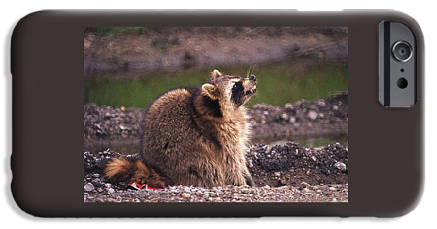 Raccoon IPhone 6 Case featuring the photograph 070406-67 by Mike Davis