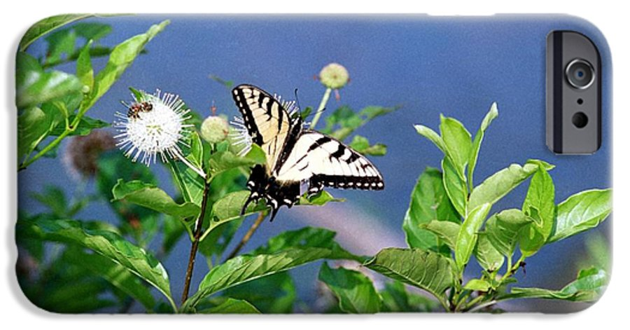 Butterfly IPhone 6 Case featuring the photograph 080706-7 by Mike Davis