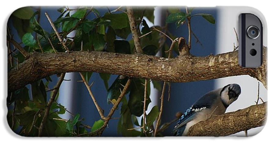 Birds IPhone 6 Case featuring the photograph Blue Bird by Rob Hans
