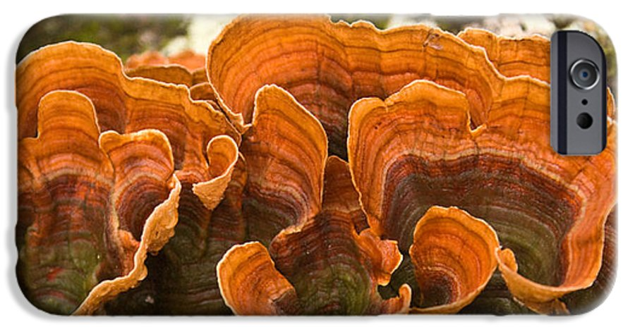 Bracket IPhone 6 Case featuring the photograph Bracket Fungi by Douglas Barnett
