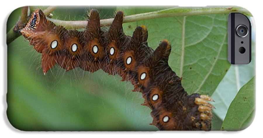 Moth IPhone 6 Case featuring the painting Hanging In There by Debbie May