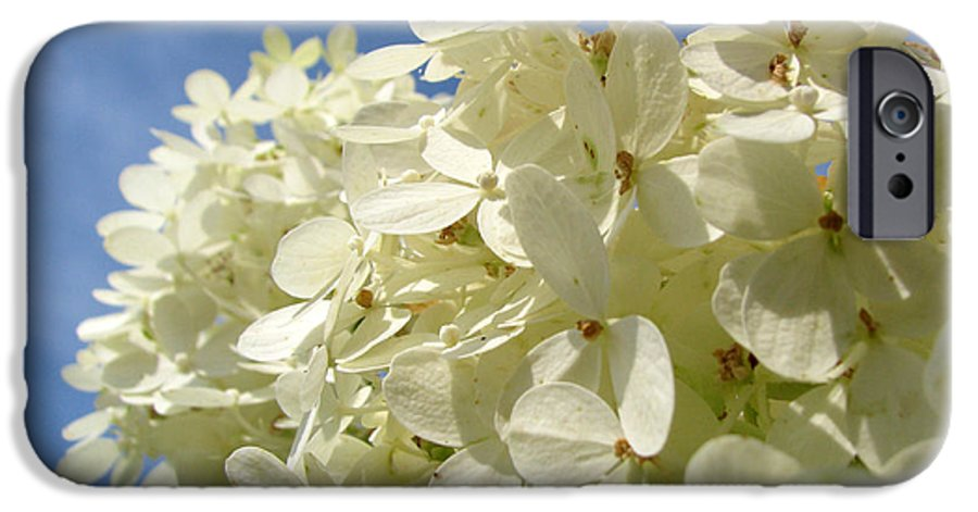 Hydranga IPhone 6 Case featuring the photograph Hydrangea by Amanda Barcon