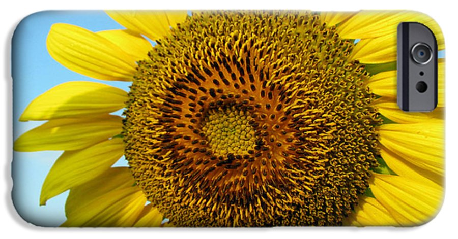Sunflower IPhone 6 Case featuring the photograph Sunflower Series by Amanda Barcon