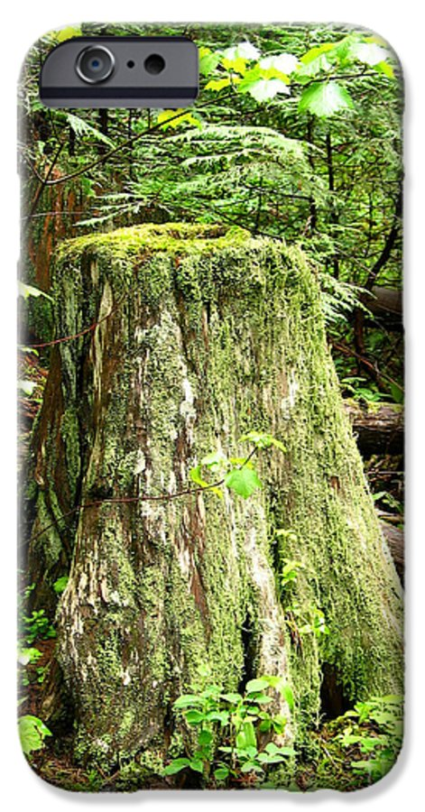 Moss IPhone 6 Case featuring the photograph Transition by Idaho Scenic Images Linda Lantzy