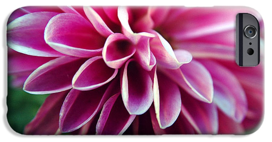 Flower IPhone 6 Case featuring the photograph Untitled by Kathy Schumann