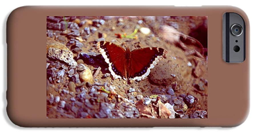 Butterfly IPhone 6 Case featuring the photograph 113093-1 by Mike Davis