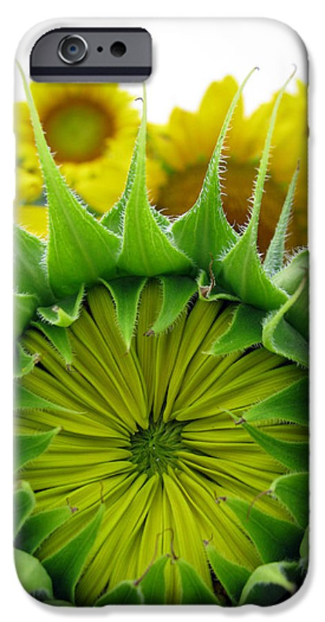Sunflwoers IPhone 6 Case featuring the photograph Sunflower Series by Amanda Barcon