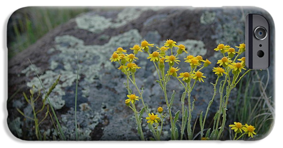 Flowers IPhone 6 Case featuring the photograph Untitled by Kathy Schumann