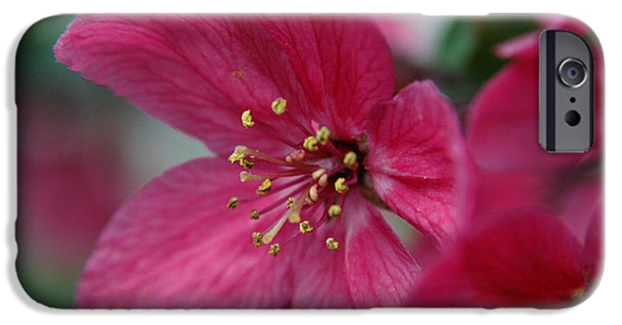 Flora IPhone 6 Case featuring the photograph Untitled by Kathy Schumann