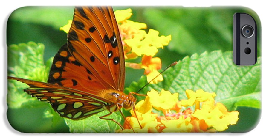 Butterfly IPhone 6 Case featuring the photograph Butterfly by Amanda Barcon