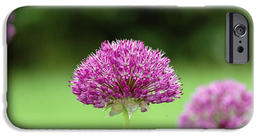 Purple IPhone 6 Case featuring the photograph Untitled by Kathy Schumann