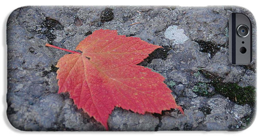 Leaf IPhone 6 Case featuring the photograph Untitled by Kathy Schumann