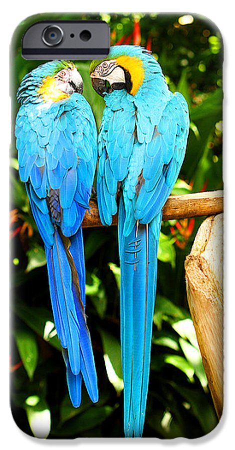Bird IPhone 6 Case featuring the photograph A Pair Of Parrots by Marilyn Hunt