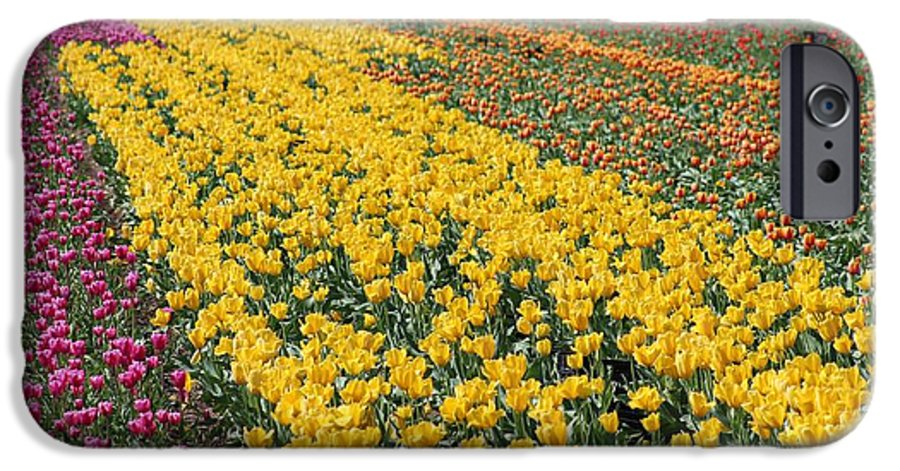 Tulips IPhone 6 Case featuring the photograph A Season For Everything by Karen Young