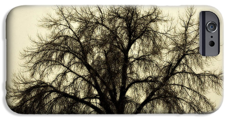 Tree IPhone 6 Case featuring the photograph A Winter's Day by Marilyn Hunt