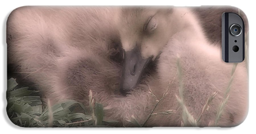 Goose IPhone 6 Case featuring the photograph All Is Right In My World by Kenneth Krolikowski