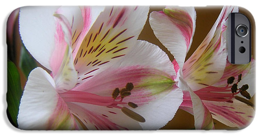 Nature IPhone 6 Case featuring the photograph Alstroemerias - Listening by Lucyna A M Green