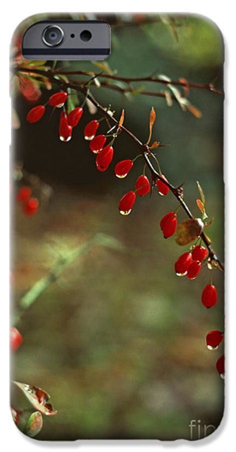 Pennsylvania IPhone 6 Case featuring the photograph American Barberry With Raindrops by Anna Lisa Yoder