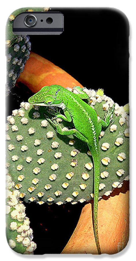 Nature IPhone 6 Case featuring the photograph Anole Hanging Out With Cactus by Lucyna A M Green