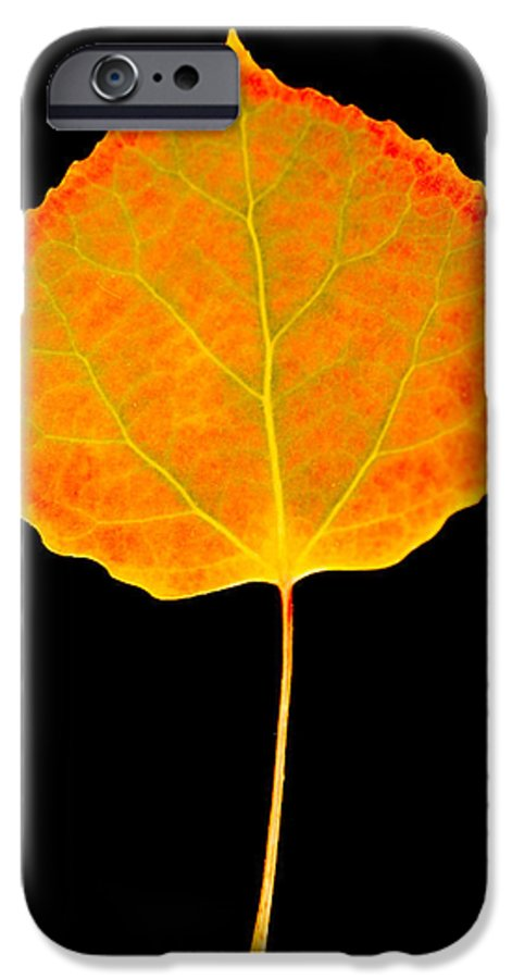 Leaf IPhone 6 Case featuring the photograph Aspen Leaf by Marilyn Hunt