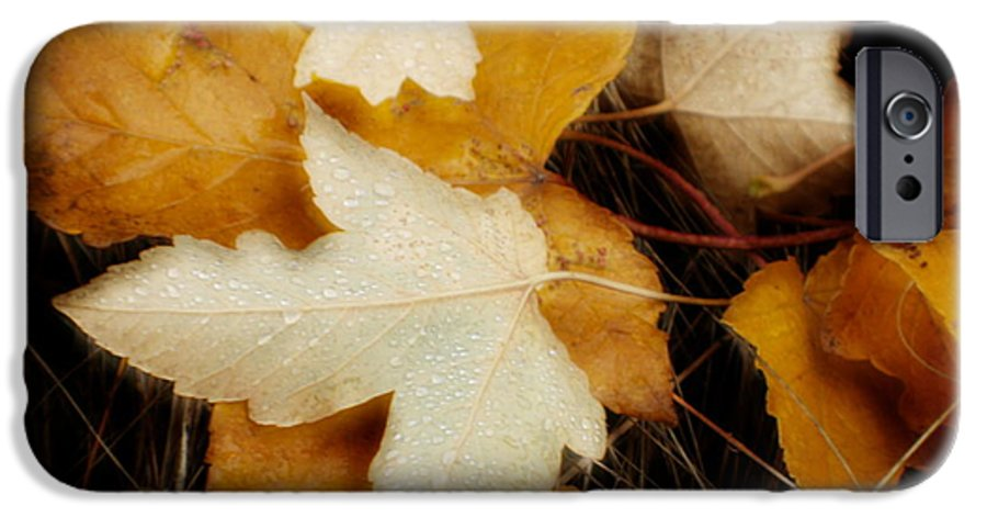 Leaf IPhone 6 Case featuring the photograph Autumn Dew by Idaho Scenic Images Linda Lantzy