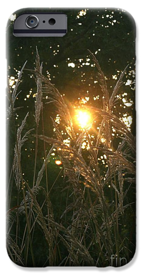 Light IPhone 6 Case featuring the photograph Autumn Grasses In The Morning by Nadine Rippelmeyer