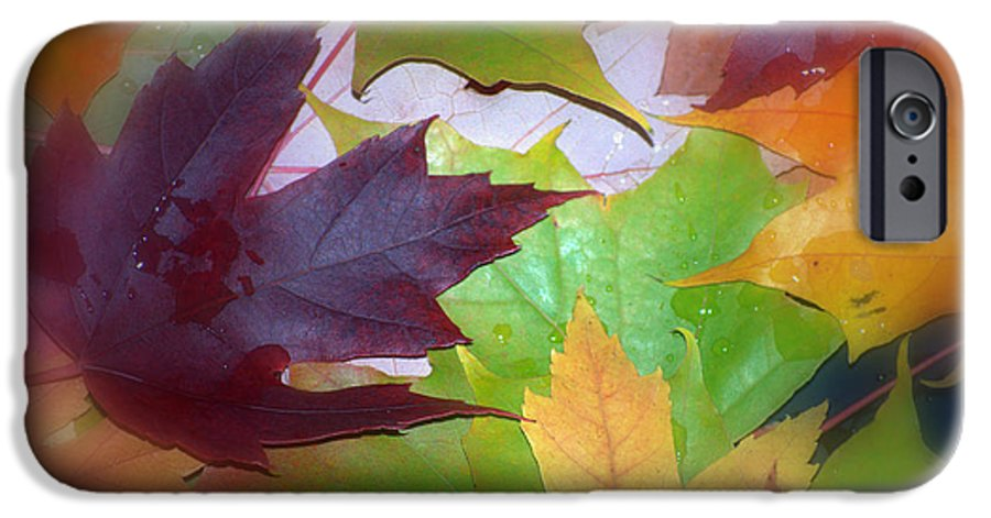 Trees IPhone 6 Case featuring the photograph Autumn by Larry Keahey