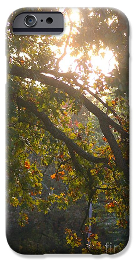 Autumn IPhone 6 Case featuring the photograph Autumn Morning Glow by Nadine Rippelmeyer