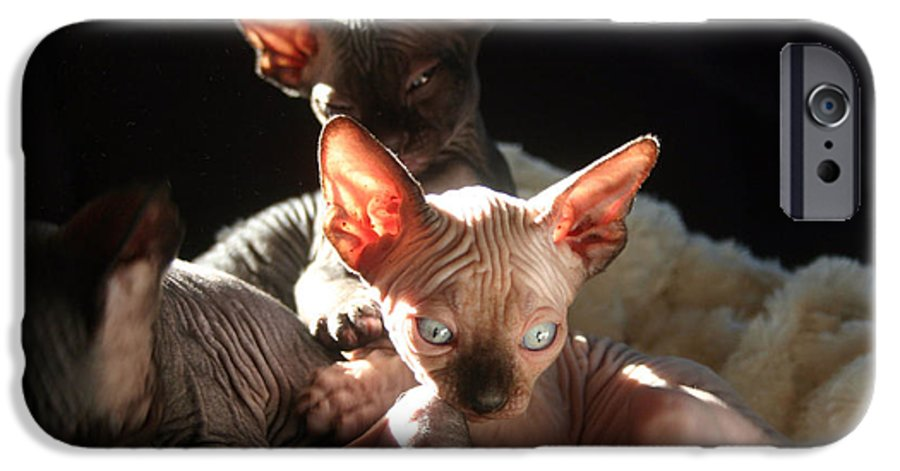 Photo IPhone 6 Case featuring the photograph Baby Sphynx Cats by Ruben Flanagan