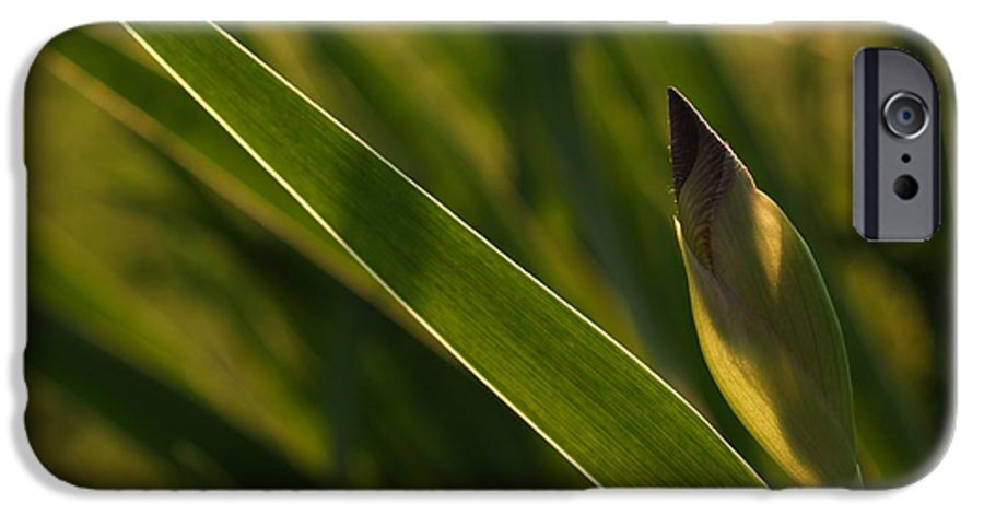 Iris IPhone 6 Case featuring the photograph Backlit Iris Bud In Evening by Anna Lisa Yoder