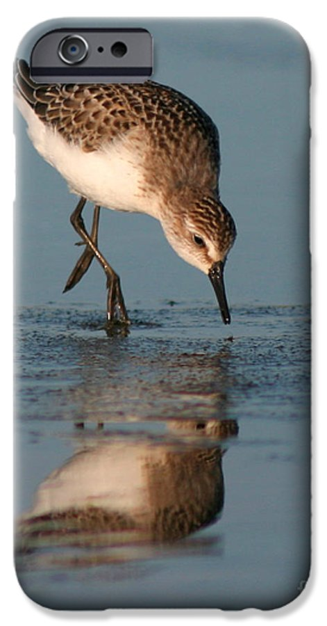 Sanderling IPhone 6 Case featuring the photograph Ballet Feeding Of A Sanderling by Max Allen