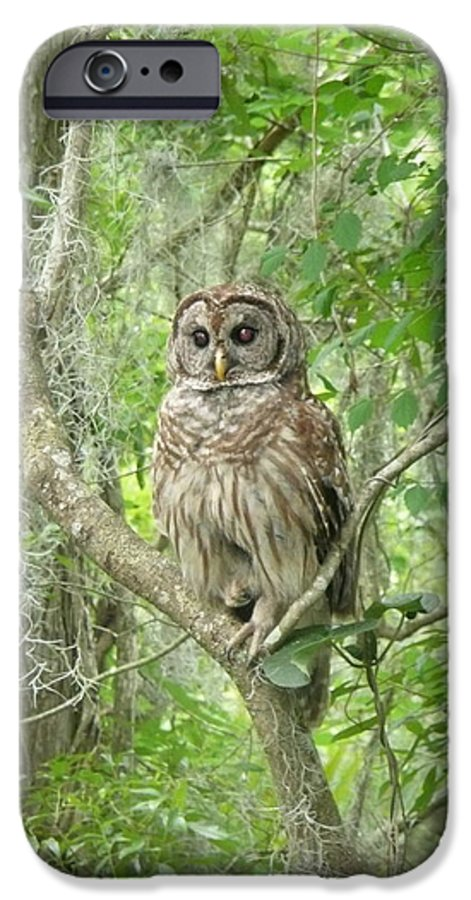 Nature IPhone 6 Case featuring the photograph Barred Owl I by Kathy Schumann