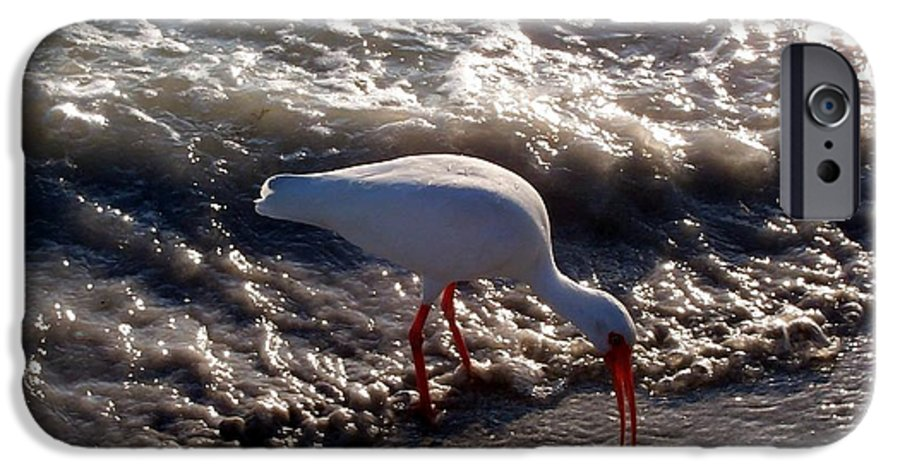 Beach IPhone 6 Case featuring the photograph Beach Bird by Elizabeth Klecker