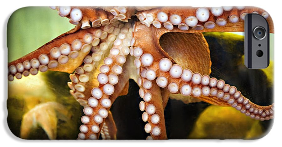 Octopus IPhone 6 Case featuring the photograph Beautiful Octopus by Marilyn Hunt