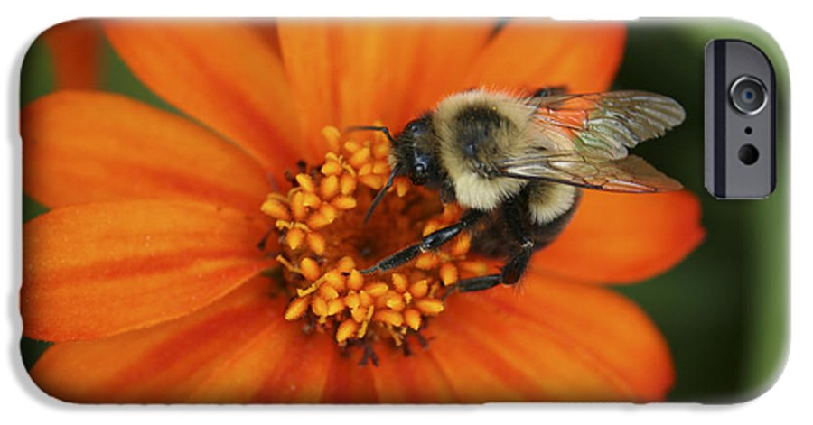 Bee IPhone 6 Case featuring the photograph Bee On Aster by Margie Wildblood
