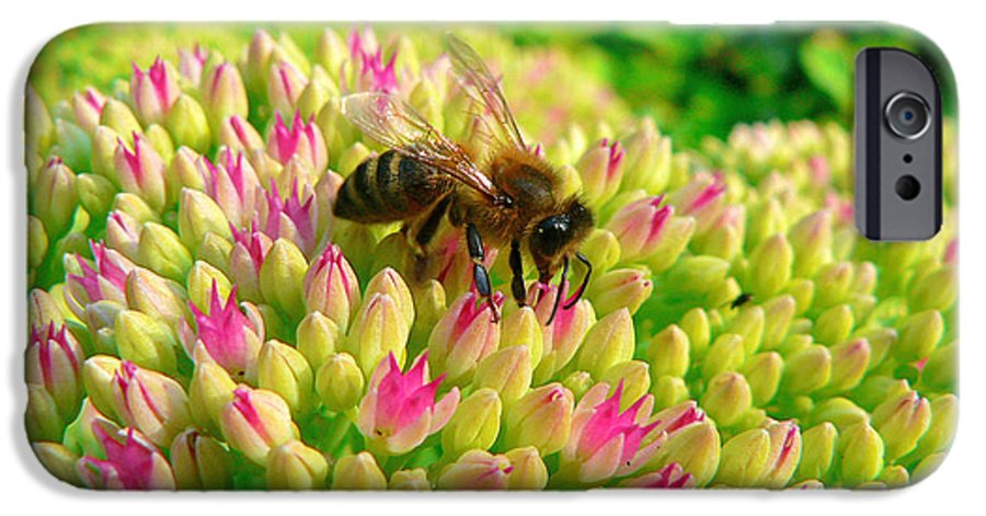 Flowers IPhone 6 Case featuring the photograph Bee On Flower by Larry Keahey