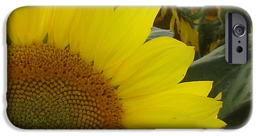Bee's IPhone 6 Case featuring the photograph Bee On Sunflower 1 by Chandelle Hazen