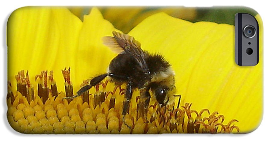 Bee's IPhone 6 Case featuring the photograph Bee On Sunflower 2 by Chandelle Hazen