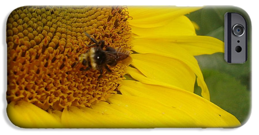 Bee IPhone 6 Case featuring the photograph Bee On Sunflower 3 by Chandelle Hazen