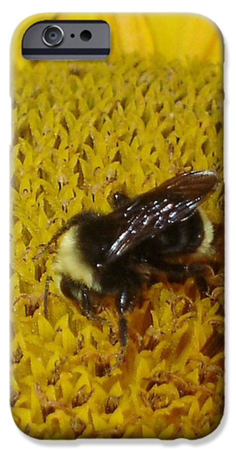Bee IPhone 6 Case featuring the photograph Bee On Sunflower 4 by Chandelle Hazen