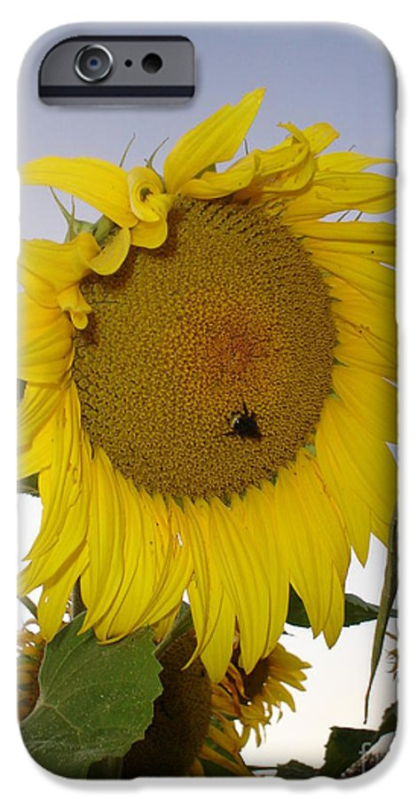 Bee On Sunflower IPhone 6 Case featuring the photograph Bee On Sunflower 5 by Chandelle Hazen