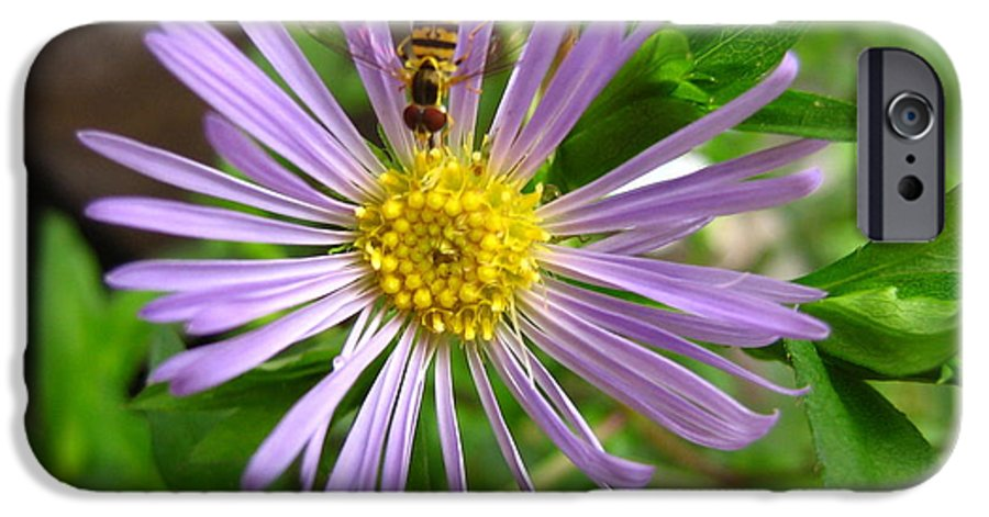 Bee IPhone 6 Case featuring the photograph Bee On Wildflower by Melissa Parks