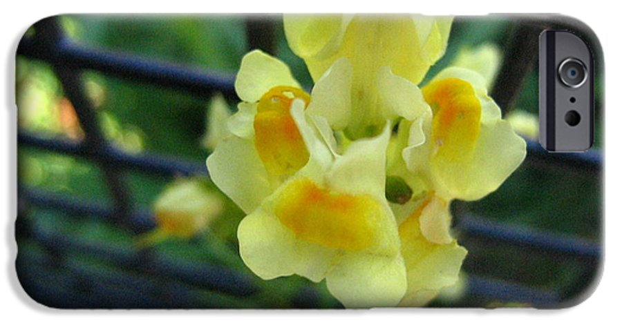 Flower IPhone 6 Case featuring the photograph Between The Fences by Melissa Parks